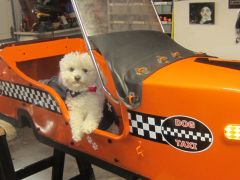 A Texas dog is ready to ride