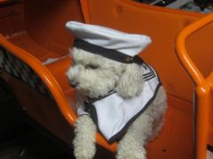 The skipper of the Dog Taxi