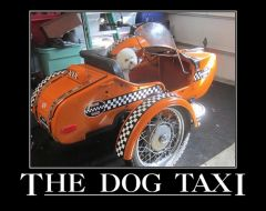 The Dog Taxi