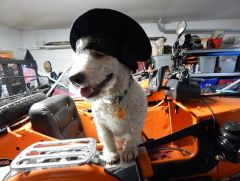 Sailor in training to become a hack pooch
