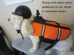 Murph with his ZoomerGear helmet and vest with a dog camera mount